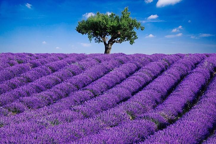 الحديقة المعجزة في قائمة أجمل حدائق الزهور في العالم 00d1b913-d960-451e-8a56-aacf32ed2b44