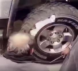 بالفيديو.. الكلاب البوليسية تشارك في إحباط محاولة تهريب خمور داخل إطارات مركبة