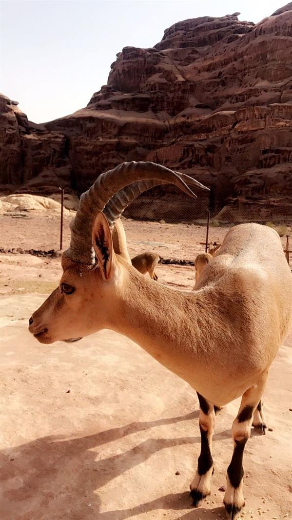 بالصور.. شاب سعودي ينشئ محمية 1d1e267c-b567-4f26-8