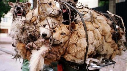 تايوان تحظر قتل القطط والكلاب لأكل لحومها!