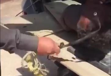شرطة الرياض تعلن القبض على سعودي ظهر في مقطع فيديو وهو يضرب أثيوبيا بقطعة حديدية