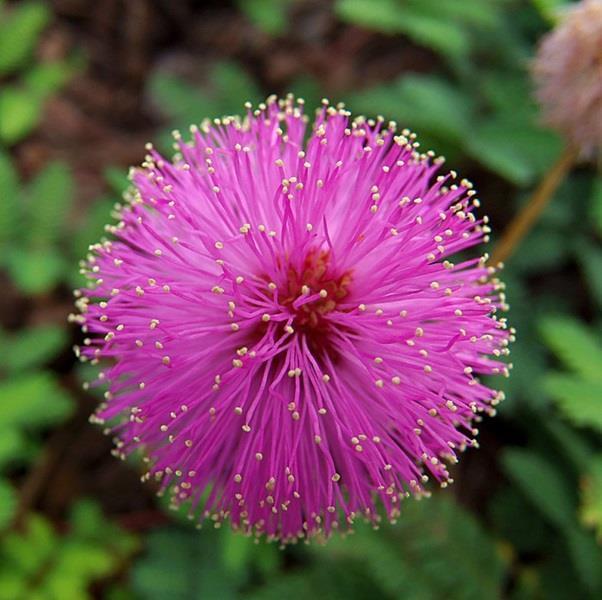 صور: أغرب 10 زهور في العالم 27e9702c-1ef5-4f3f-9