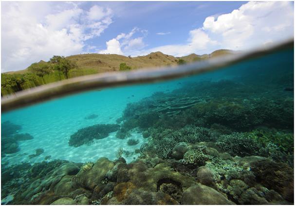 تشتهر حديقة كومودو الوطنية في إندونيسيا باحتوائها على العديد من النظم البيئية المتنوعة، من أشجار المانجروف والشعاب المرجانية و
