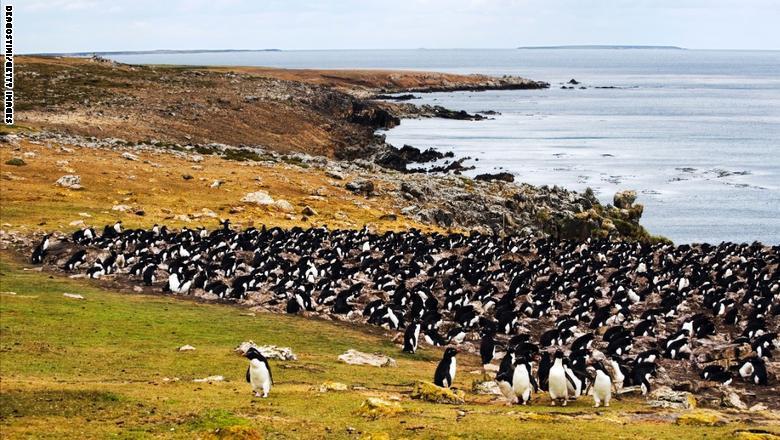 """جزيرة """"بيبل""""، جزر فوكلاند"""