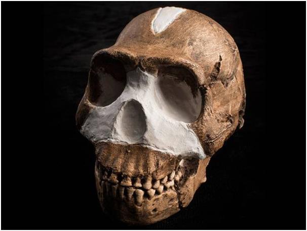"""تم العثور على حفرية نوع جديد من أسلاف الإنسان سُمي بـ """"هومو ناليدي"""" في جنوب إفريقيا، وتعد هذه الحفرية أحد أعظم الاكتشافات في ا"""