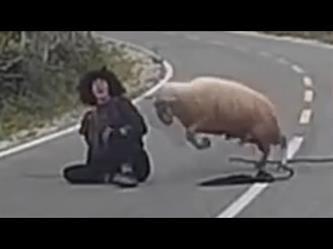 خروف يهاجم راعي أغنام بعنف