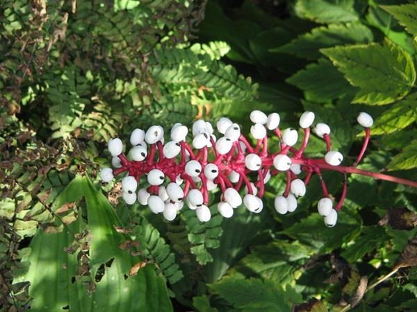 صور: أغرب 10 زهور في العالم 422399b1-a7c0-43bc-9