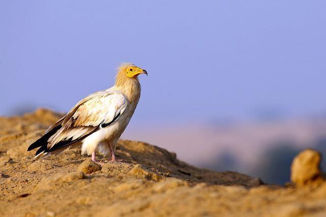 أجمل محميات طبيعية في الهند للحيوانات البرية