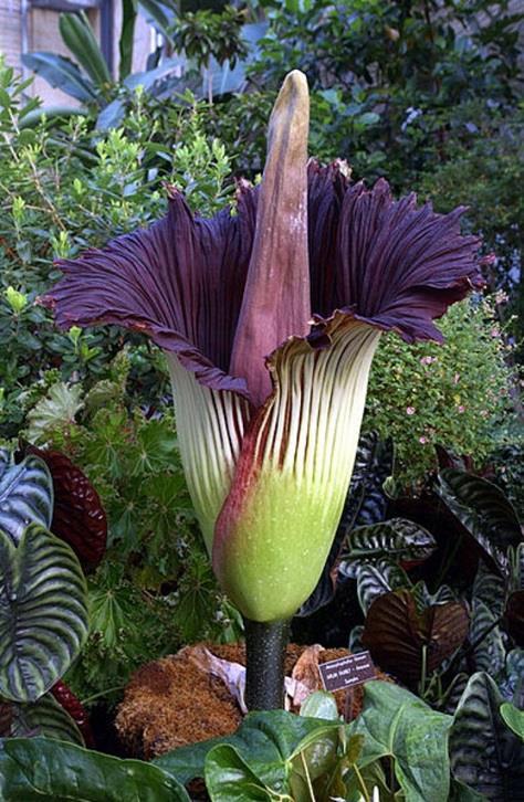 صور: أغرب 10 زهور في العالم 45396864-ed51-4f6a-b