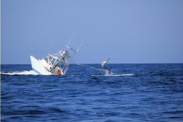 بالصور .. سمكة عملاقة تتسبب في غرق سفينة صيد قرب سواحل بنما
