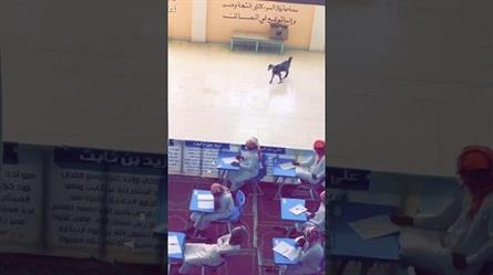 بالفيديو.. ماعز شاردة تفاجئ طلابا في إحدى لجان الاختبارات النهائية