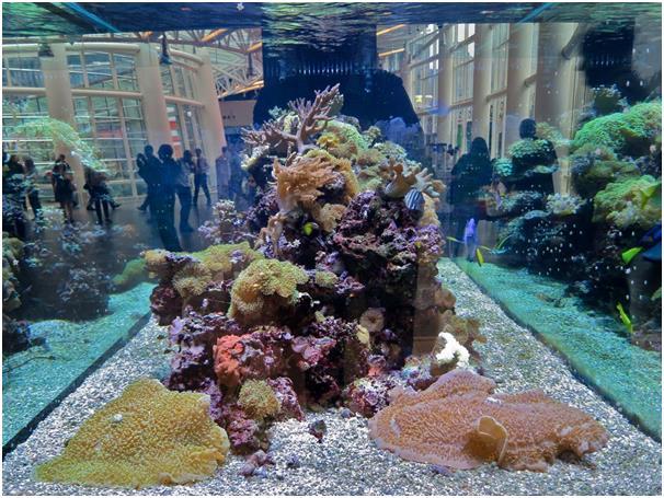 """كما يحب الأسماك الملونة، وكان يمتلك حوضين سمك ضخمين في """" City Hall""""، وكان ينفق 62,400 دولار أسبوعيًا للعناية بهما والحفاظ عليه"""