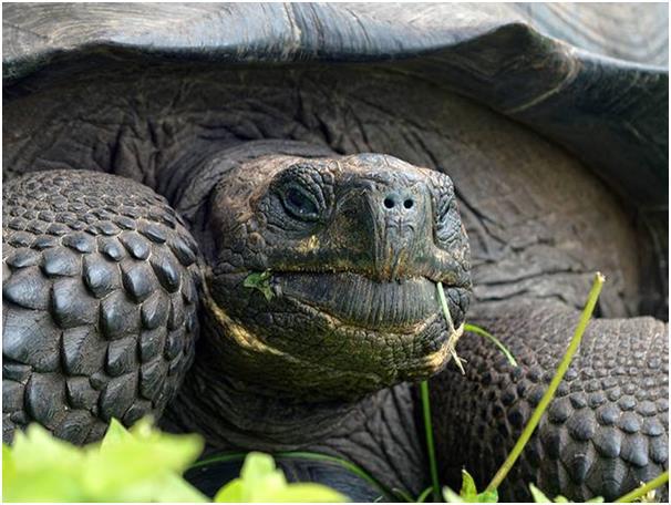 """حين اكتشف العالم """"داروين"""" سلاحف جزيرة غالاباغوس الضخمة، وبينما تمت ملاحظة أن هناك فروق ضئيلة بين السلاحف في شرق وغرب جزيرة سان"""