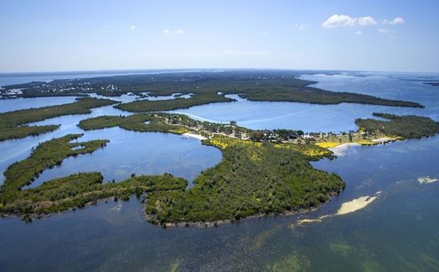 """جزيرة LITTLE BOKEELIA في ولاية فلوريدا الأمريكية ، وتضم شجرة كان قد زرعها الأمريكي الشهير """"توماس اديسون"""" مخترع المصباح الكهربا"""