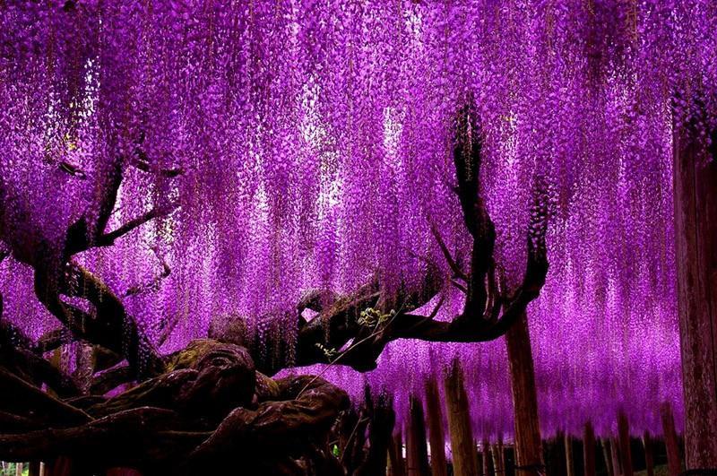 الحديقة المعجزة في قائمة أجمل حدائق الزهور في العالم 63949b94-c9f2-413a-bdd3-06daa174a90b