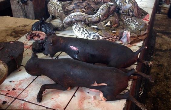 سوق في إندونيسيا يشوي الكلاب والجرذان والخفافيش