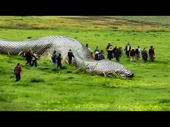 أكبر 5 أفاعي حقيقية في العالم لن تصدق كم يبلغ حجمها..!!