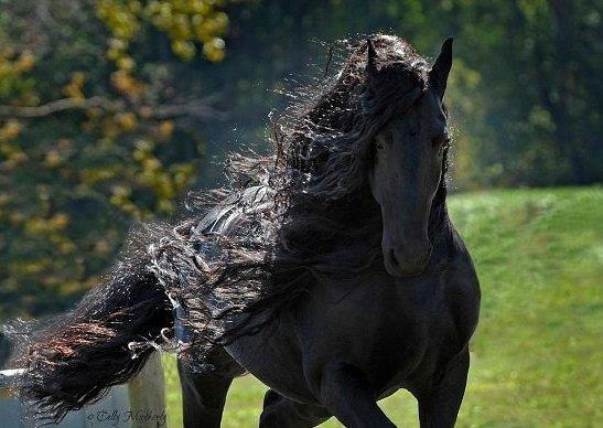 """""""فريدريك"""" الحصان الأكثر وسامة في العالم"""