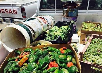 مصادرة 800 كيلو غرام من الخضروات من الباعة المخالفين في أسواق السيح