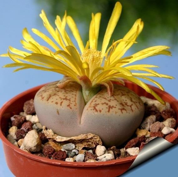 صور: أغرب 10 زهور في العالم 792e64e9-1b2f-4ffe-9