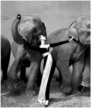 امرأة بين الأفيال