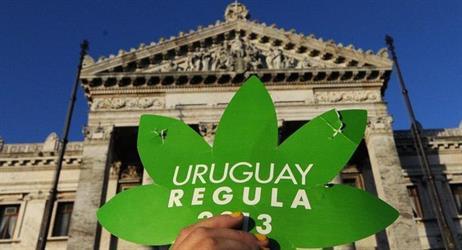 أوروغواي ترخص لبيع الماريغوانا في الصيدليات