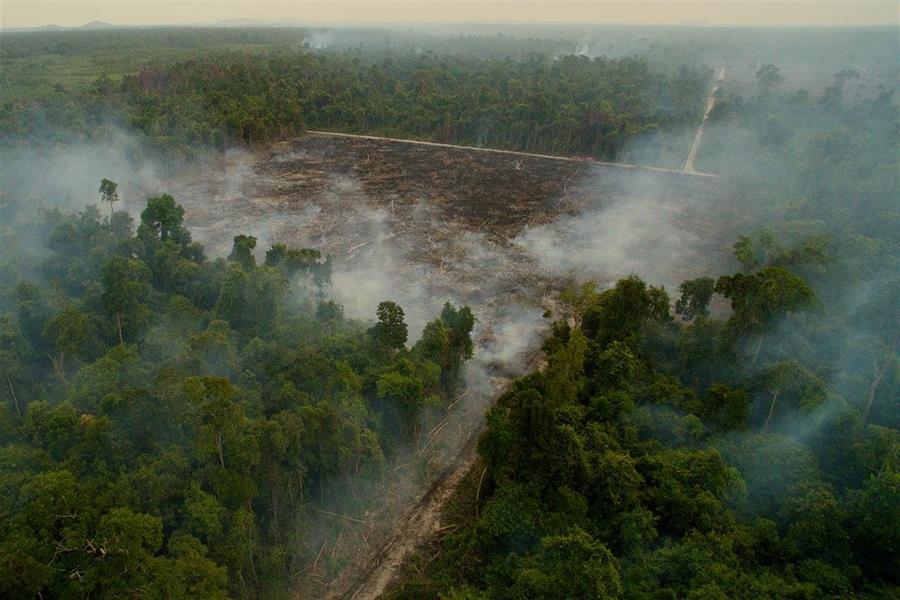 """صورة """"Road to destruction"""" للمصور تيم لامان"""