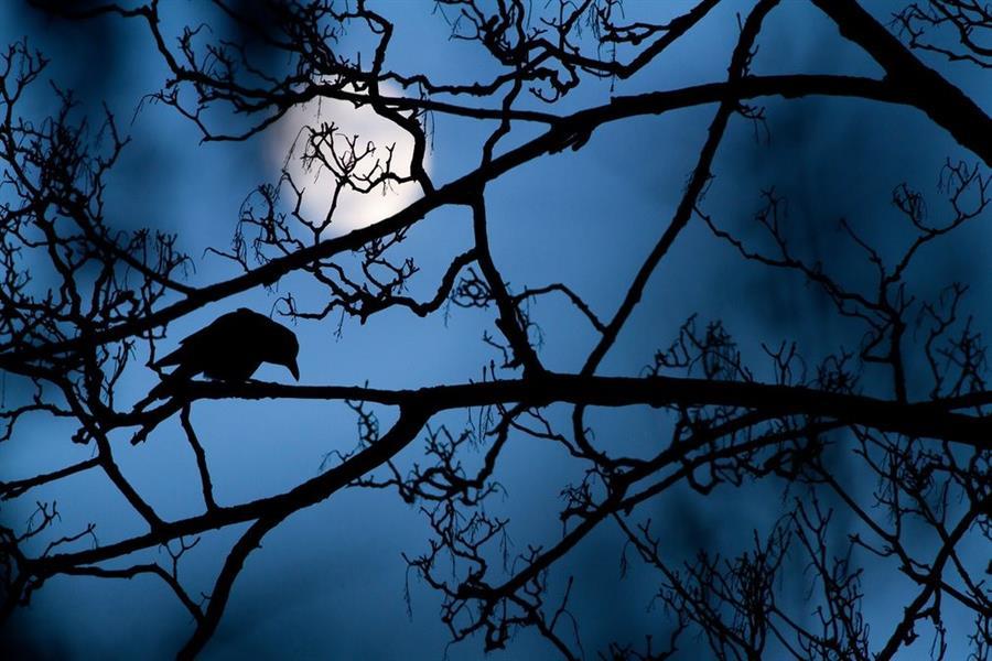 """صورة """"The moon and the crow"""" للمصور غيديون نايت من المملكة المتحدة"""