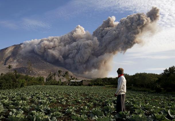 رجل من إحدى القرى بهضبة كارو يقف على حقل للملفوف قريب من الرماد المنبعث من بركان جبل سينابونغ