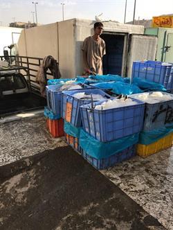 بلدية الشوقية تواصل جولاتها الرقابية على سوق الأسماك