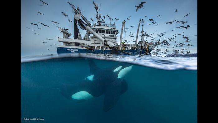 خفايا الحياة البرية في مسابقة أجمل صورة