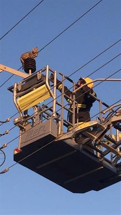 شاهد.. عملية إنقاذ الدفاع المدني لقط من فوق أسلاك الضغط العالي بعسير