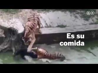 شبان يلقون حماراً حياً إلى نمرين