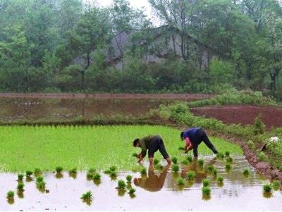 رغم أن الصين  تزرع المحاصيل على 7% فقط من مساحات الأراضي القابلة للزراعة، إلا أن 25% من سكان العالم يعتمد على محاصيلها الزراعي