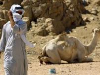 صحراء سيناء