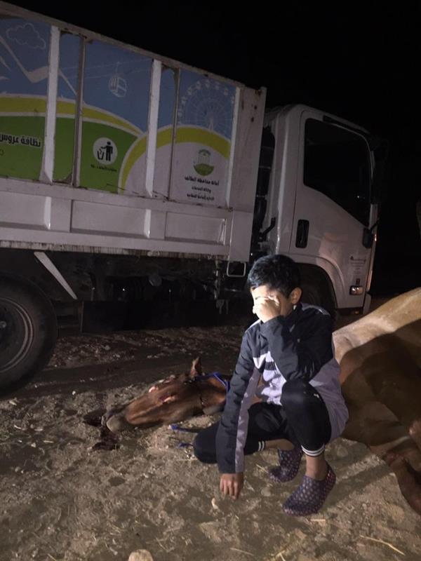 بالصور.. طفل يبكي على فرسه النافقة بعدما دهستها شاحنة أمام ناظريه ومواطن يهديه حصاناً أصيلاً مواساةً له..