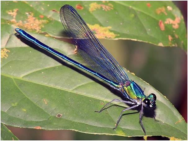 هناك نحو 60 نوعًا من حشرات مقترنات الأجنحة واليعسوب الإفريقية تم ذكرها في منشور واحد العام الماضي، ومعظم هذه الأنواع الجديدة