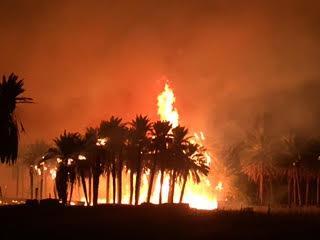 حريق هائل يلتهم مزارع نخيل غرب دومة الجندل