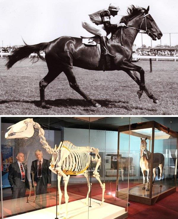 بالصور.. تعرف على أفضل خيول السباق على مر التاريخ