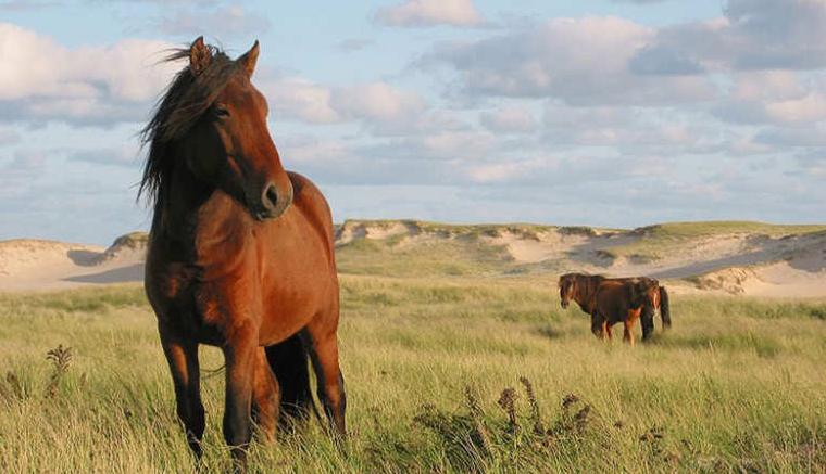 محمية جزيرة سابل الوطنية (كندا):