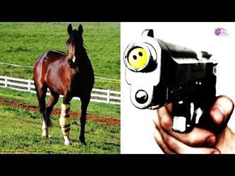 لماذا تقتل الخيول عند كسر ساقها ؟؟