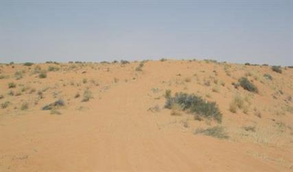العثور على جثتي فلبيني ونيبالي تاها في نفود التوضيحية شرق الرياض
