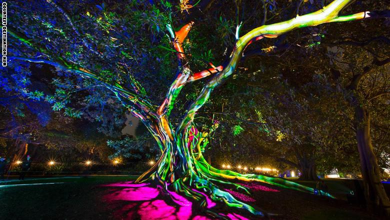الطبيعة والتكنولوجيا تجتمع على شجرة التين هذه في خليج مورتون في الحديقة النباتية الملكية.