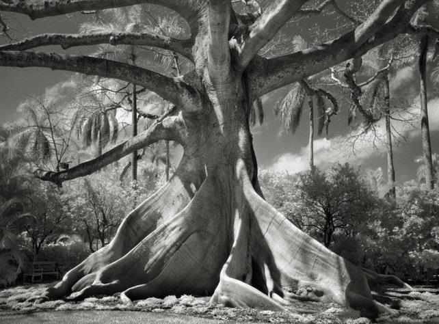صور رائعة لمجموعة من أقدم الأشجار في العالم