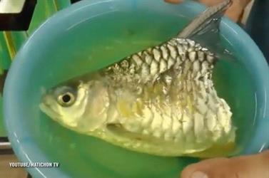بالفيديو - سمكة عاشت 6 أشهر بنصف جسد في تايلاند