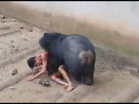 دب جائع يهاجم عامل في حديقة بتايلاند