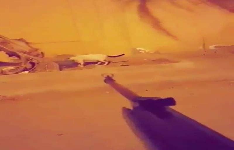 """""""شرطة مكة"""" تؤكد القبض على """"سفاح القطط"""" بجدة.. مواطن عمره 31 عاماً"""