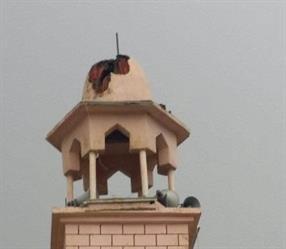 وفاة شاب بصعق كهربائي أثناء إصلاحه مأذنة مسجد في بيشة