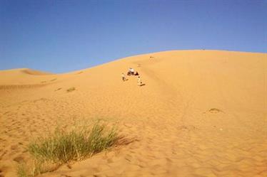 مسن تائه في الصحراء يقطع 12 كلم على قدميه قبل العثور عليه لدى راعي أغنام