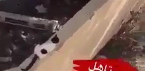 بالفيديو.. شخص يصور نفسه وهو يرجم قطة بصخرة ويقتلها